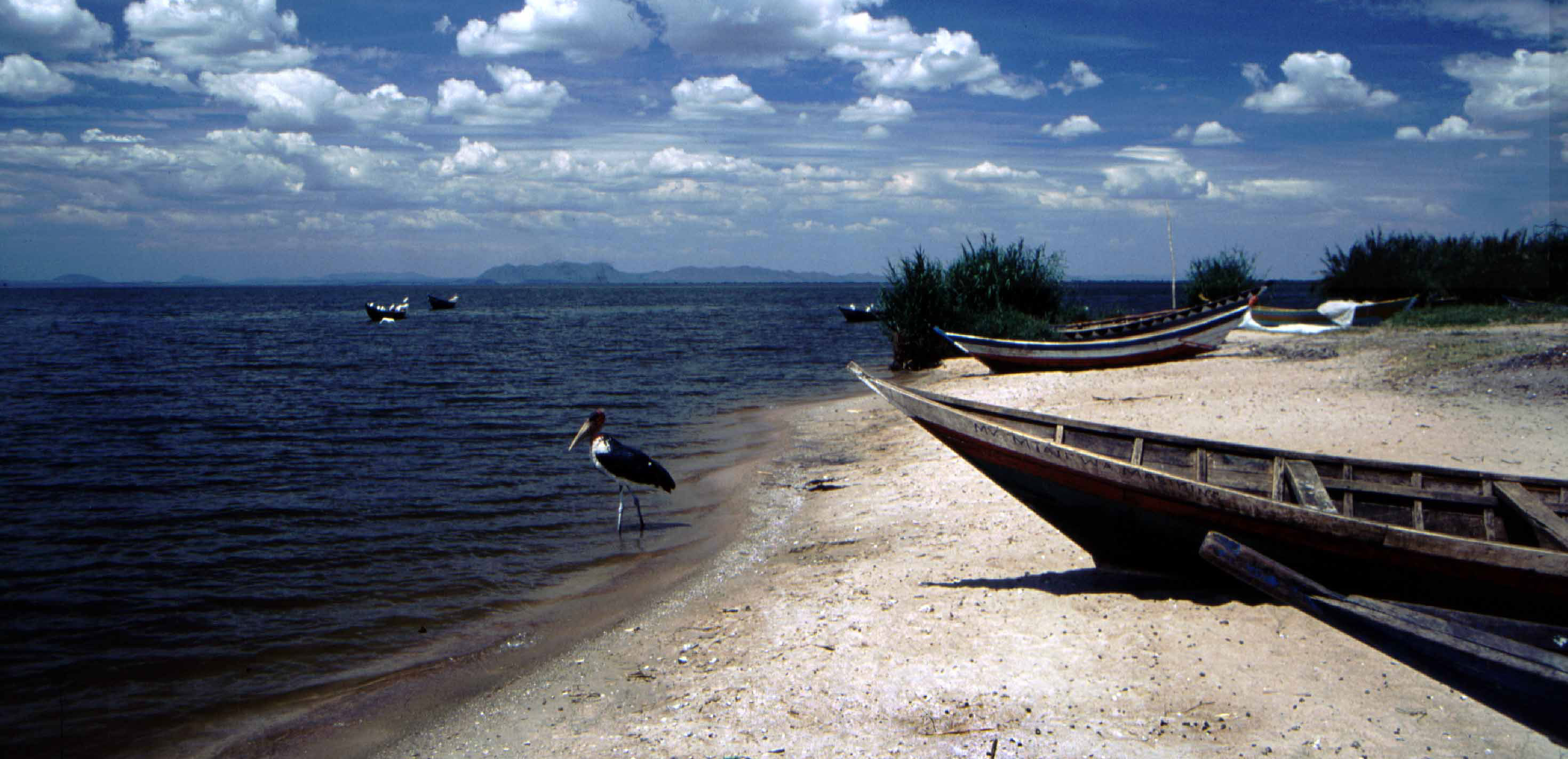 lake Victoria Safari
