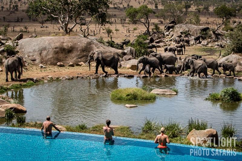 876_serengeti-serena-safari-lodge-tanzan